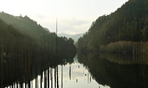 立ち枯れた木々が神秘的な自然湖(撮影・滝沢徹郎)