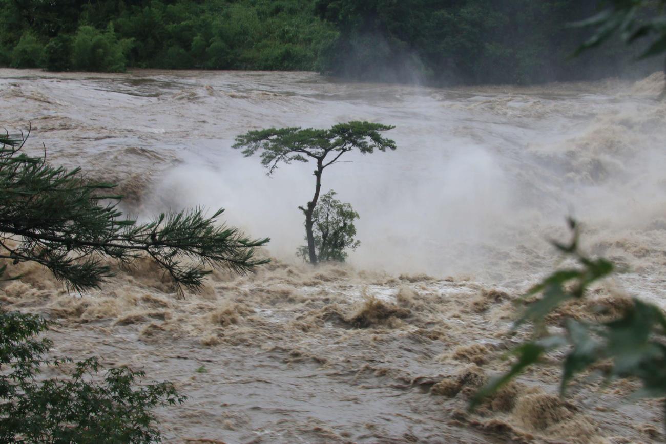 濁流に耐える曽木の滝の一本松(伊佐市提供)