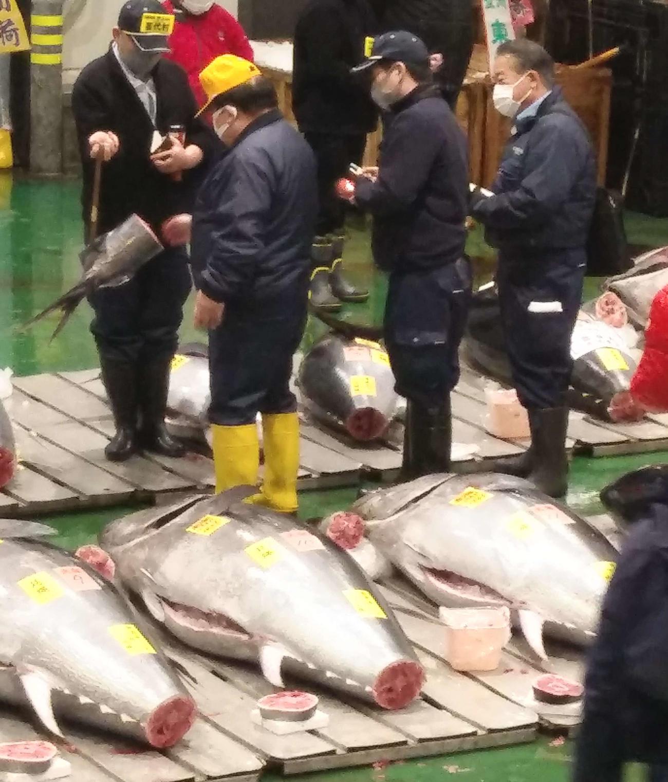 木村清社長(左から2番目)はマグロの尻尾の断面を見て脂の乗り具合を目利きした