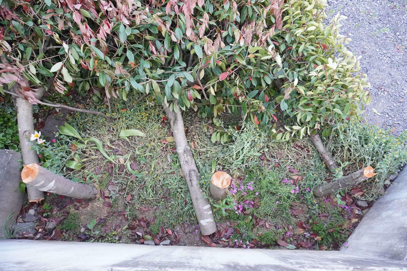 撮り鉄に人気の撮影スポット付近の住宅敷地内で、何者かに切られた3本の木(撮影・沢田直人)
