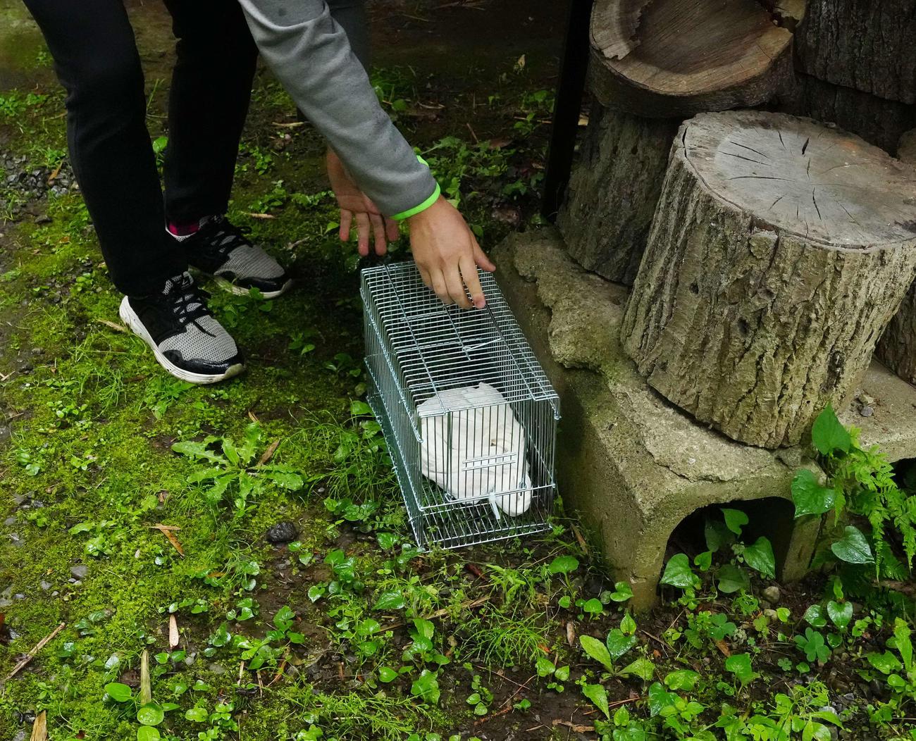 逃げ出したアミメニシキヘビの捕獲のため、おびき寄せるエサを設置する飼い主=午前10時4分(撮影・江口和貴)