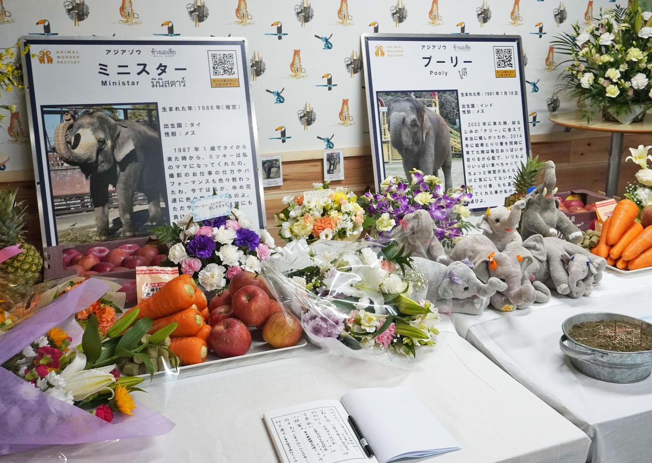 「市原ぞうの国」で17日に設置された「プーリー」と「ミニスター」の献花台(撮影・沢田直人)
