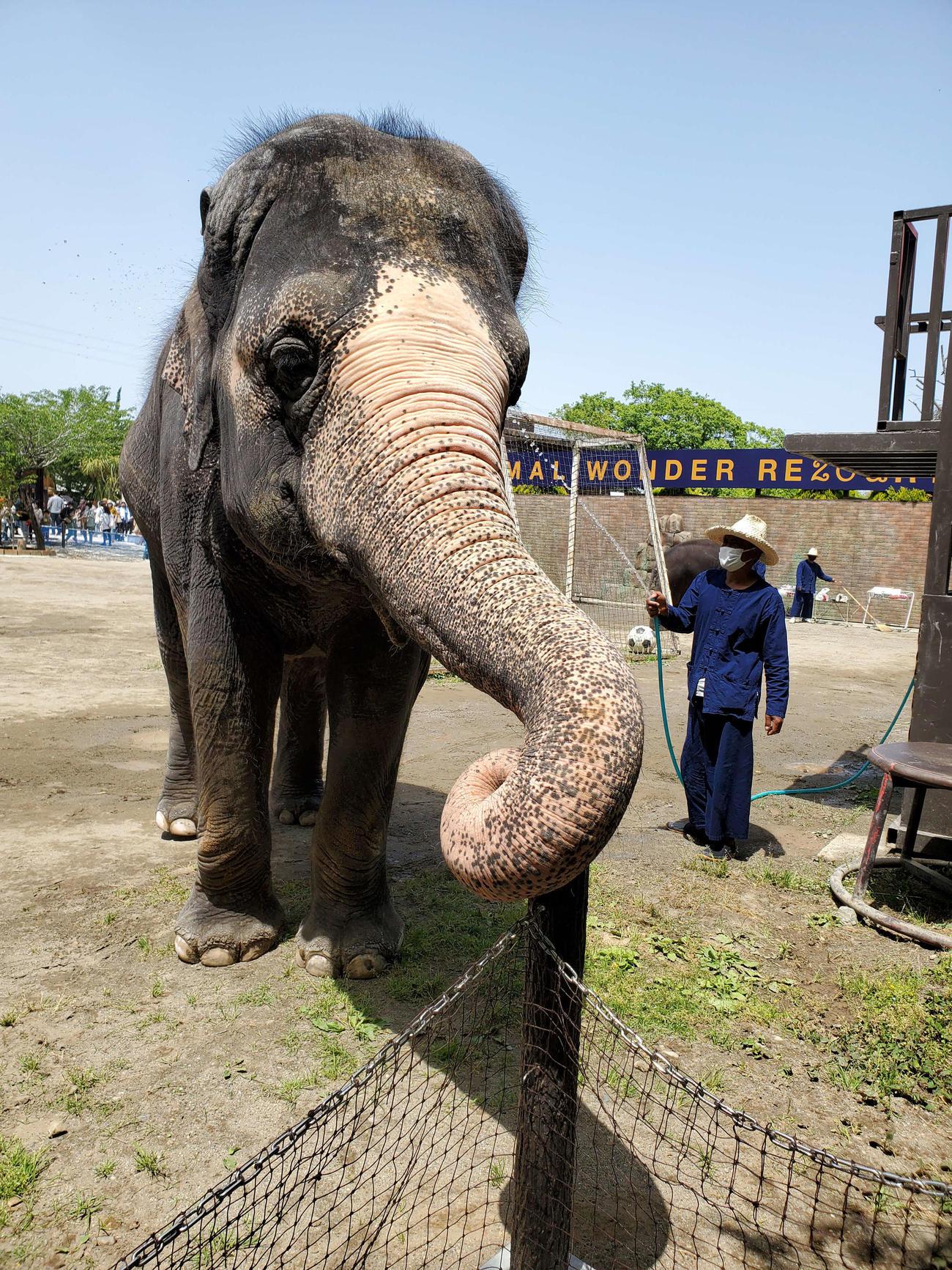 千葉県市原市の動物園「市原ぞうの国」で16日に死んだ、アジアゾウの35歳の雌「ミニスター」