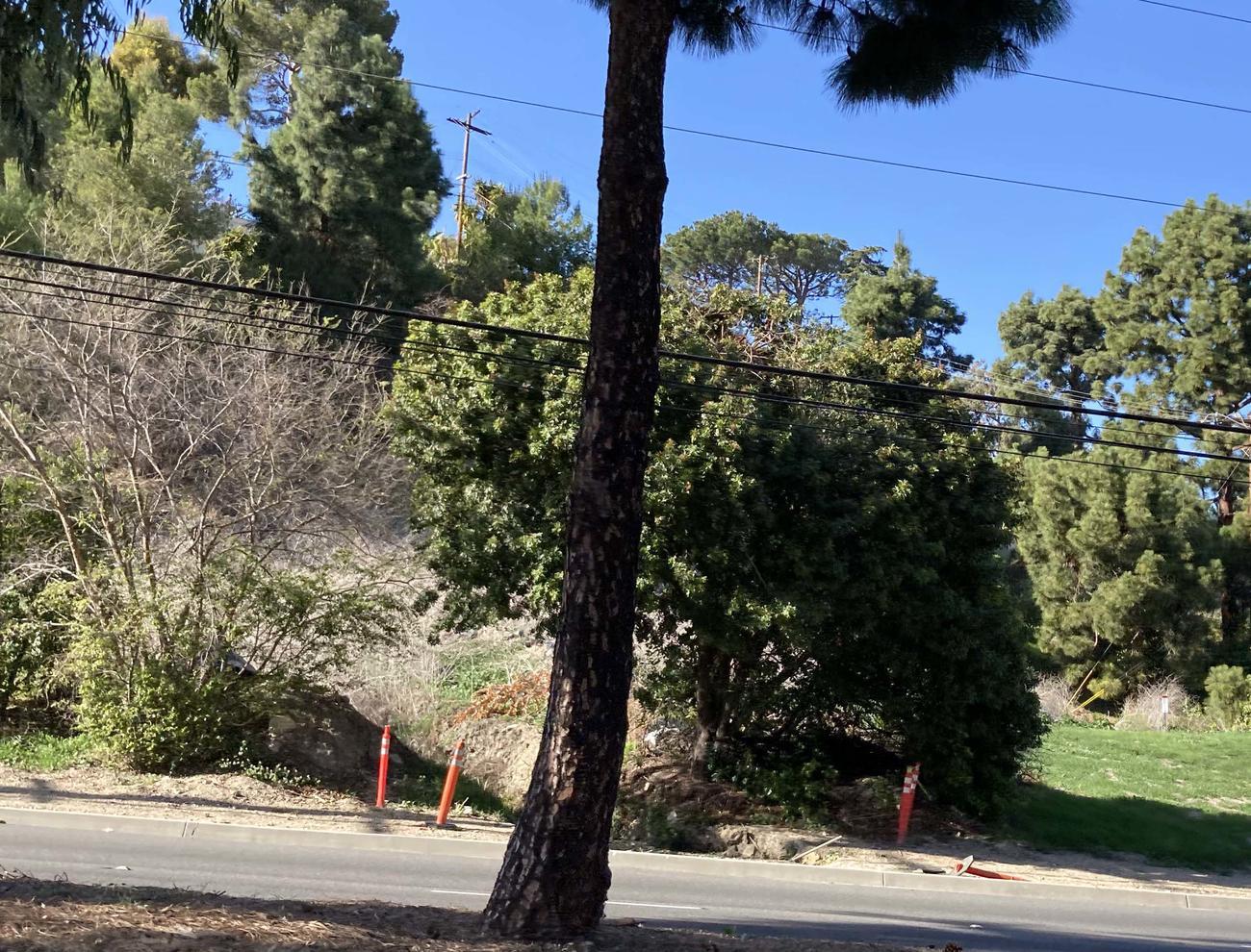 ウッズの車は手前の車線からこの木がある中央分離帯を越えて赤いポールの奥の草むらに転落しました