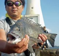 横浜・野島堤防 クロダイ爆釣、例年の倍以上 - 釣り : 日刊スポーツ