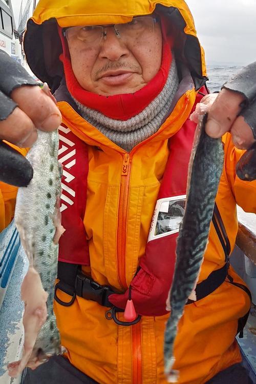 オニカサゴのエサ。釣ったサバを3枚におろして、半身を縦長に半分にして皮だけにする