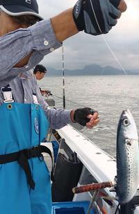 静岡・久料 いつかはモロコ、成長すると100キロ超も - 釣り : 日刊スポーツ