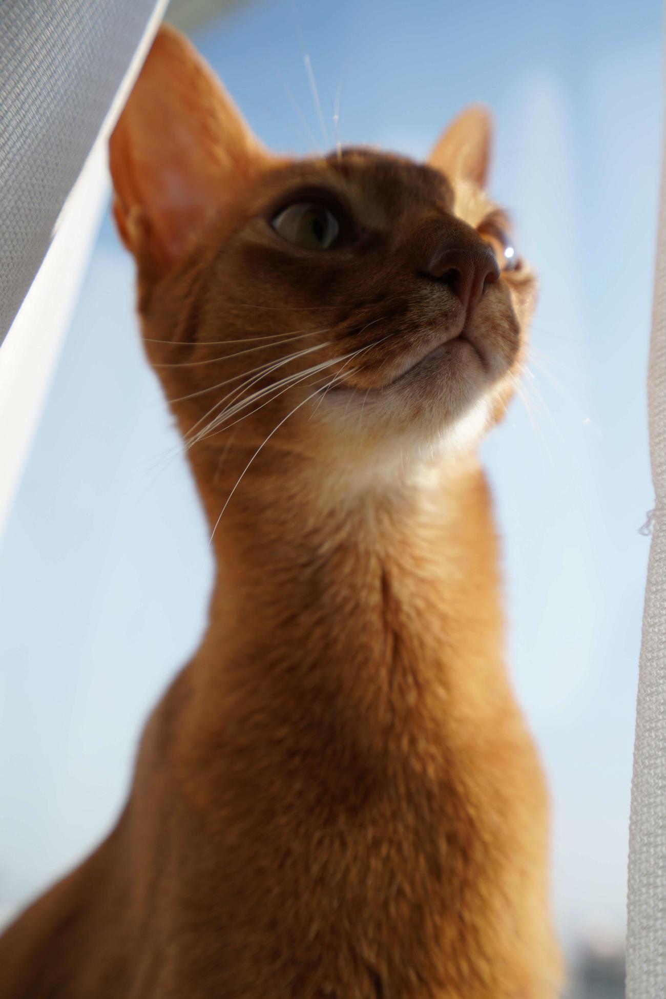 ウォルシュの愛猫ジャザイア(富士通提供)