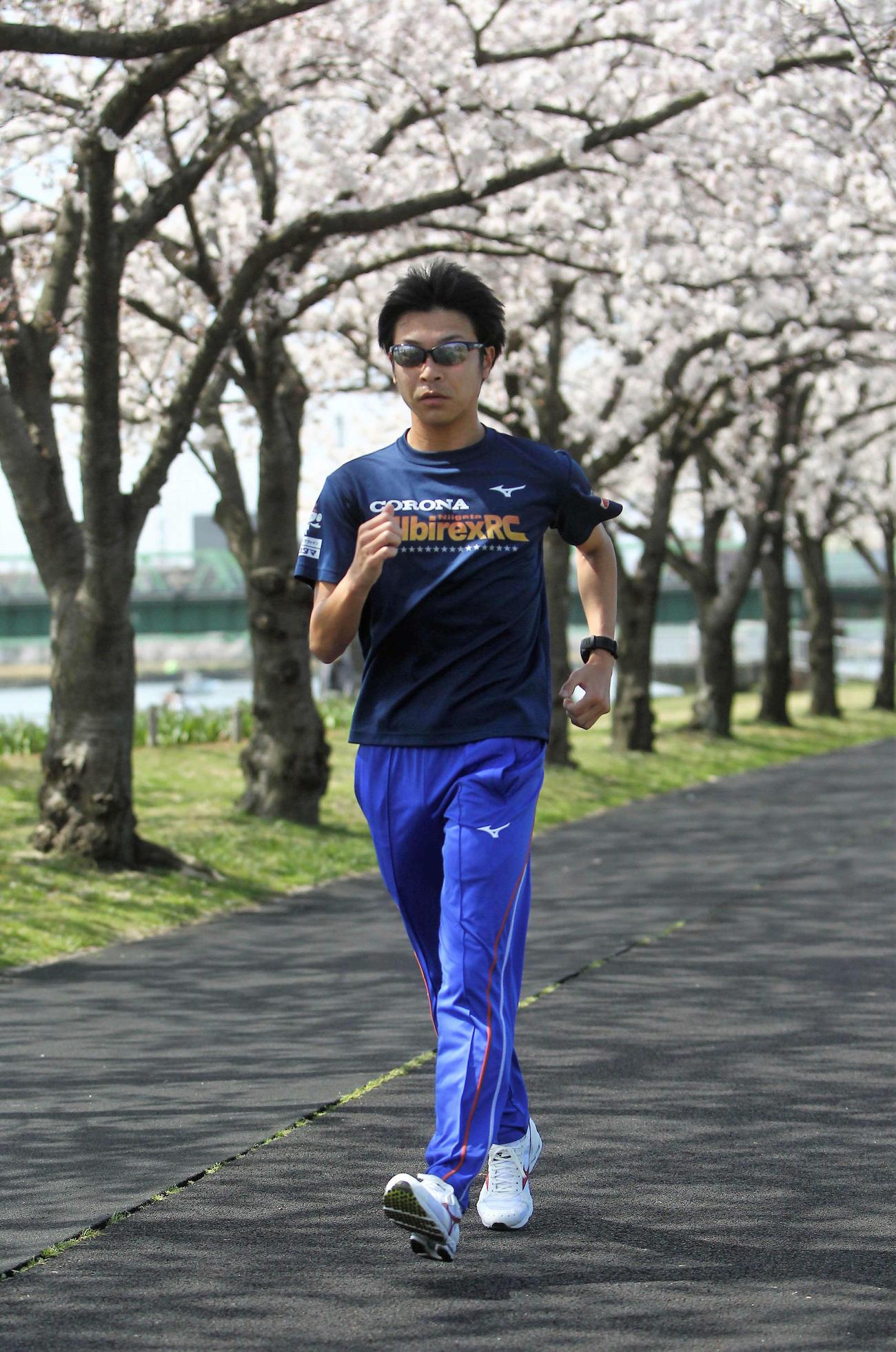 桜並木沿いを10キロ歩く小林